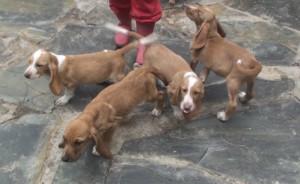 cachorrosbarbara01