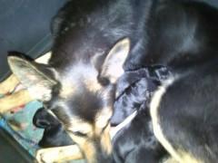 Mama con 9 cachorros