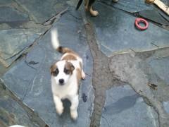Cachorrito 3 meses hijo de Luga