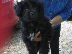Cachorrito 2 meses