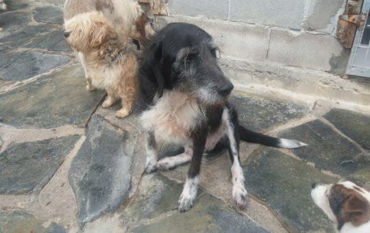 Nuestros perros abueletes necesitan un hogar urgente