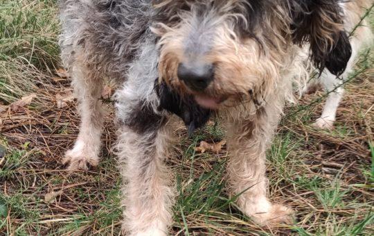 Nuestros perr@s abueletes; necesitan un hogar, para  tener un FINAL FELIZ
